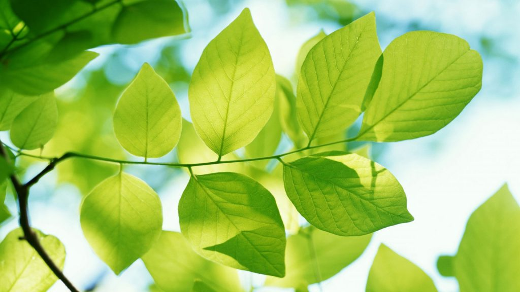 listva